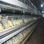 The poultry farming automatic laying egg hens farming equipment advantage