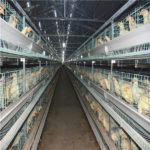 The advantage of using poultry farming automation equipment for farming