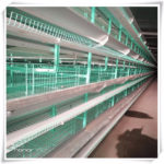 Fully automated poultry farming equipment introduction