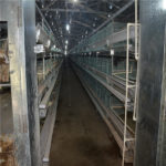 Characteristics of poultry farming layer chicken cages system