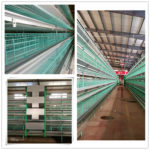 Advantages of poultry farming chicken cages