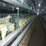 The classification and advantages of poultry farming layer chicken cages