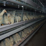Some cautions in the use of poultry farming automation equipment