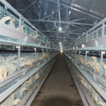 Excellent poultry farming automation broiler farming equipment