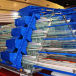 High Quality Automated Chicken Layer Cages for Sale