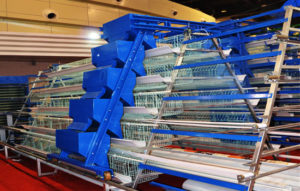 Automated A type layer chicken cage