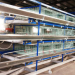 Modern Broiler Cages System With Lower Price