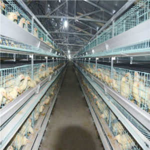H type 3-tier layer battery cage
