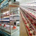 China Manufacturer Battery Cage System for Broilers With Lower Price