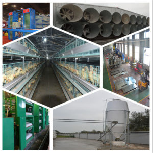 battery chicken equipment with high quality