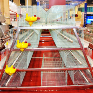 brooder chicken cages