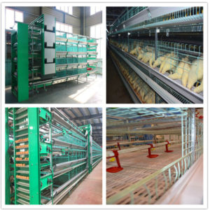 chicken battery cages in livi