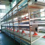 How about using cascading automated chicken breeding equipment?