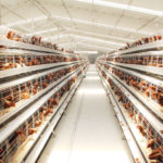 China Supplier Chicken Layer Cages for Sale in South Africa