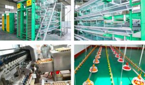 modern high quality poultry farm equipment
