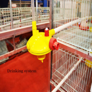 chicken drinking system