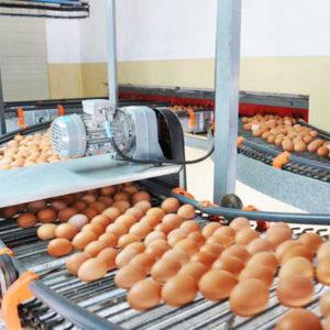 egg processing equipment