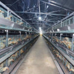 Modern Poultry Equipment in China With Lower Prices