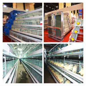 poultry system