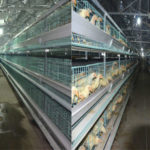 China Supplier Layer Chicken Cages For Sale in Zimbabwe