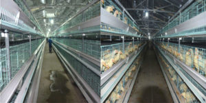 battery layer cages