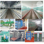 Modern Chicken Cages for Sale in Nigeria With High Quality