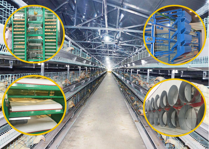 chicken layer cages for sale i