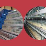 Battery Layer Cages in Nigeria With Lower Price 120 birds capacity