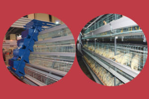 commercial battery layer cages