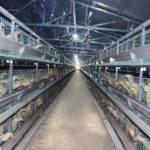 China Manufacturer Chicken Cages Commercial For Sale in Dubai