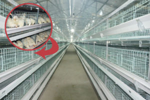 poultry farming equipment in livi machinery