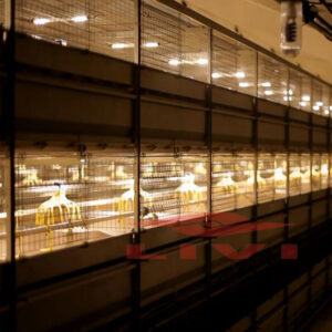 Automatic broiler cage system
