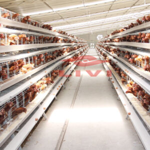 A type layer chicken cages